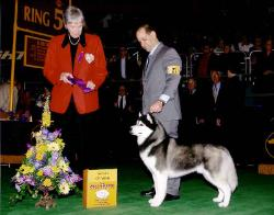 Award of Merit - Westminster Kennel Club 2006 - Mrs. James Edward Clark