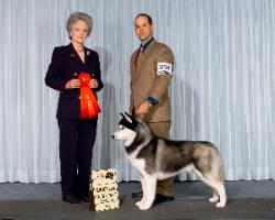 Group 2nd, Elgin Mills Kennel Club ( Canada) - Mrs. Mike Billings